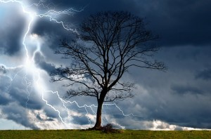 tree with lightning